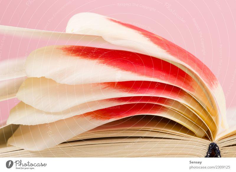 Bildungs- und Lesekonzept - offenes Buch mit Blumenblättern lesen Tisch Wissenschaften Schule lernen Studium Business Menschengruppe Bibliothek Blatt Blüte