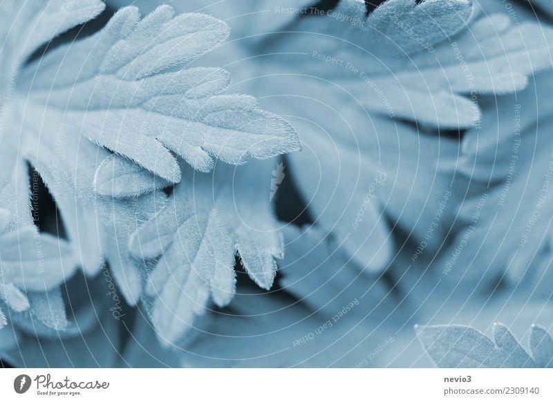 Weich Sommer Umwelt Natur Pflanze Gras Blatt Grünpflanze Nutzpflanze Wildpflanze Wachstum frisch schön türkis Gefühle Coolness Gartenarbeit Kräuter & Gewürze