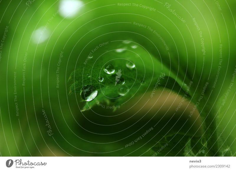 Regentropfen auf einem grünen Blatt Natur Pflanze Sommer schön Wasser ruhig Umwelt Wiese Gras Garten springen Park Wassertropfen
