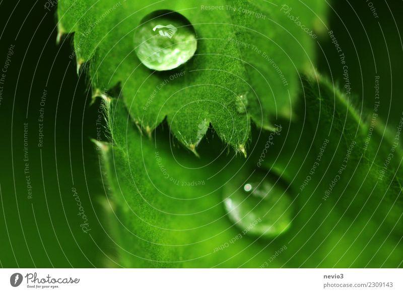 Winkende Hand im Regentropfen Mensch Natur Pflanze Sommer schön grün Blatt Freude Umwelt Frühling Kunst außergewöhnlich Stimmung Wachstum