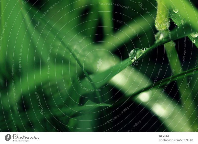 Wassertropfen auf einem Grashalm Natur Pflanze Sommer grün Erholung ruhig Umwelt Frühling Wiese natürlich Garten Regen Park