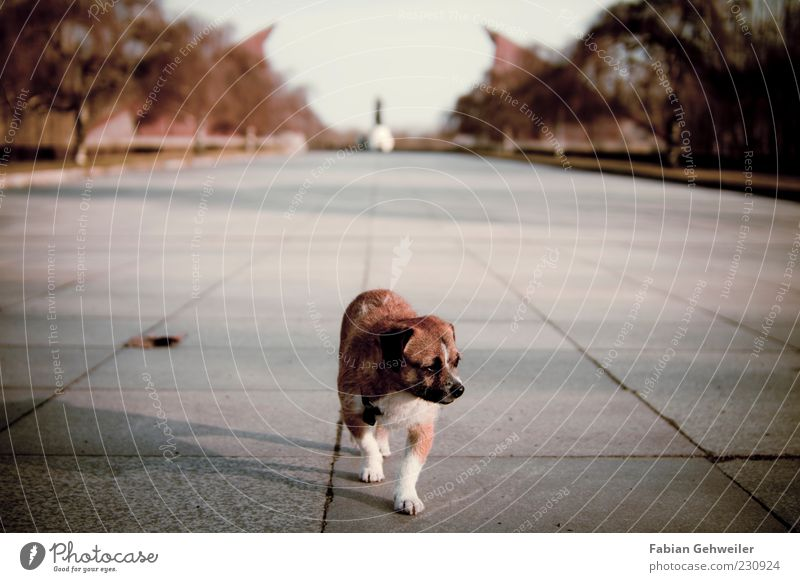 Einsamer Wolf Kunst Denkmal Tier Hund 1 gehen Blick Tapferkeit Einsamkeit Erschöpfung Zentralperspektive Ferne Statue Textfreiraum oben Bodenplatten Sonnenlicht