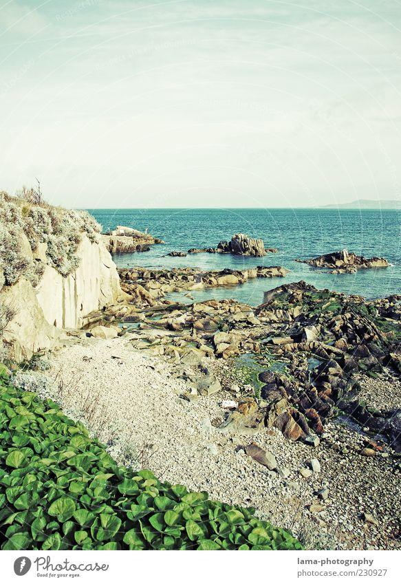 An der Küste... Natur Pflanze Meer Umwelt Landschaft Küste Felsen Reisefotografie Republik Irland Nordirland Großbritannien Strand Steinstrand