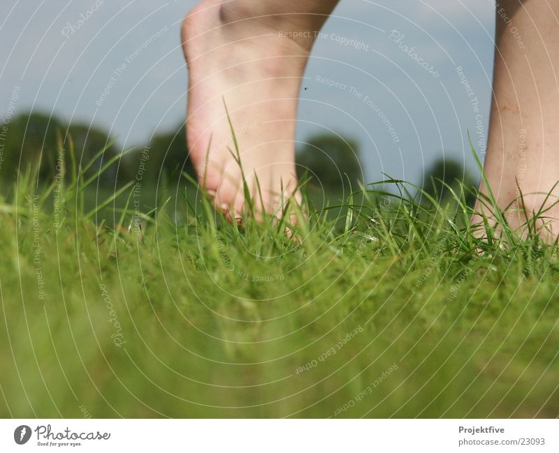 Nackte Füße in freier Natur Gras Baum grün Gelenk gehen Sportrasen unverhüllt Grünfläche Mensch Makroaufnahme Nahaufnahme Freude Fuß blau Himmel Fußknöchel