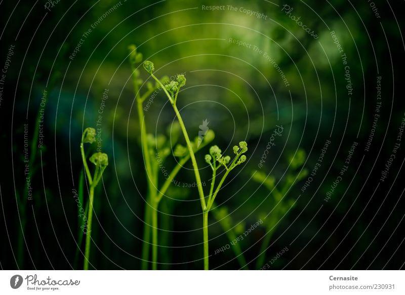 Natur grün Pflanze Umwelt dunkel Wiese Gras Frühling Garten Park Feld außergewöhnlich wild natürlich frisch authentisch