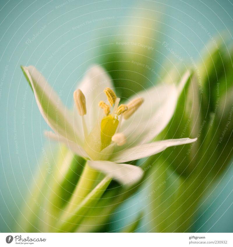 a glimpse of spring Natur grün weiß Pflanze Blume Blatt Umwelt Blüte klein Frühling natürlich frisch ästhetisch Wachstum zart