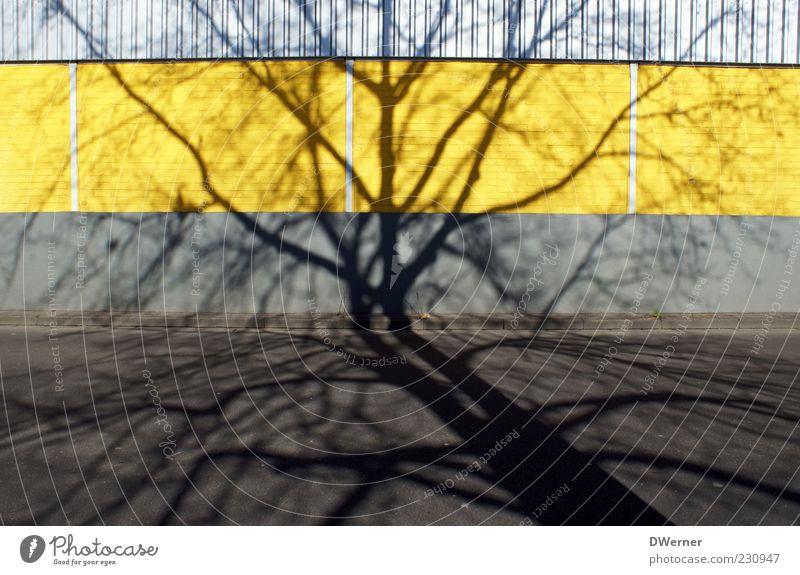 . Natur Baum Pflanze Haus gelb Straße Wand Umwelt Architektur grau Stein Stil Mauer Fassade Design
