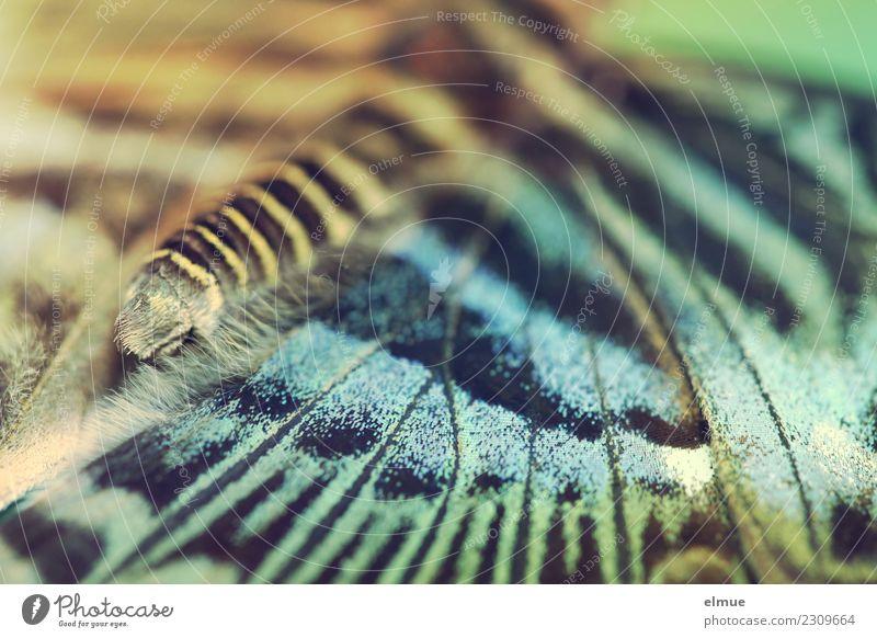 entfaltet (4) Natur Tier Frühling Tropenhaus Schmetterling Flügel Muster Zeichnung elegant hell Glück Fröhlichkeit Zufriedenheit Lebensfreude Frühlingsgefühle