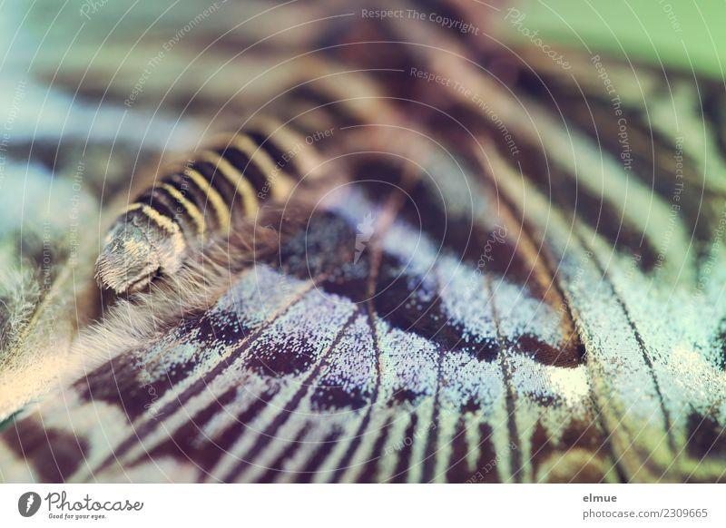 entfaltet (1) Natur Tier Frühling Schmetterling Flügel leuchten ästhetisch außergewöhnlich exotisch Fröhlichkeit schön einzigartig mehrfarbig Freude Glück