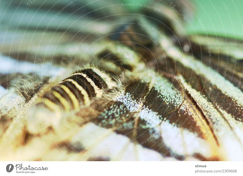 entfaltet (2) Tier Frühling Tropenhaus Schmetterling Flügel fantastisch glänzend einzigartig Glück Fröhlichkeit Frühlingsgefühle Optimismus Romantik Hoffnung