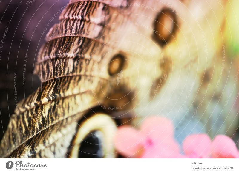 bananafalter Frühling Blüte Tropenhaus Schmetterlingshaus Flügel Bananenfalter elegant schön nah modern mehrfarbig Fröhlichkeit Frühlingsgefühle Romantik