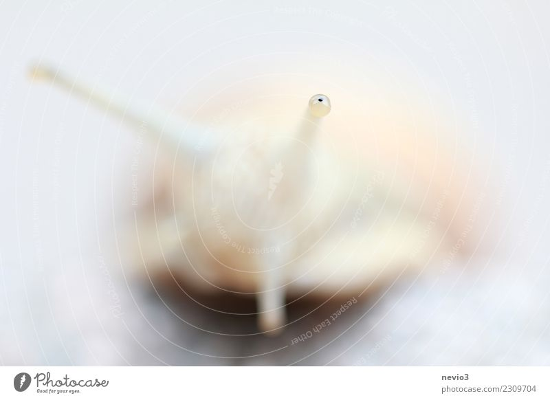 Schnecke Natur Tier Nutztier Wildtier 1 authentisch außergewöhnlich klein natürlich Neugier niedlich rund schleimig schön weich grau weiß Schneckenhaus Fühler