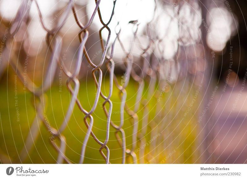 Zaun Natur Sommer Wiese Metall geschlossen authentisch trist einzigartig einfach nah historisch gruselig Grenze trashig Barriere Aggression