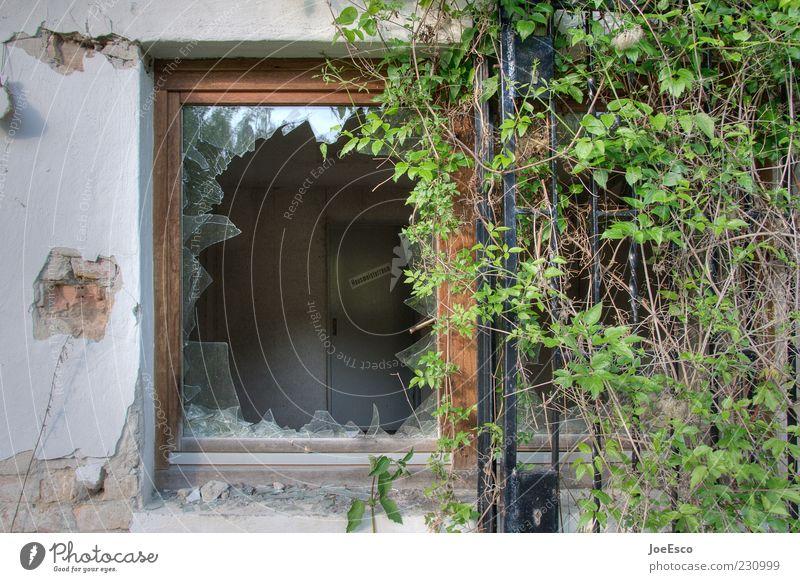 #230999 Pflanze Fenster dreckig Glas Fassade kaputt Ruine Loch Fensterscheibe Riss Zerstörung Scherbe Einbruch Bruch Glasscheibe Unbewohnt
