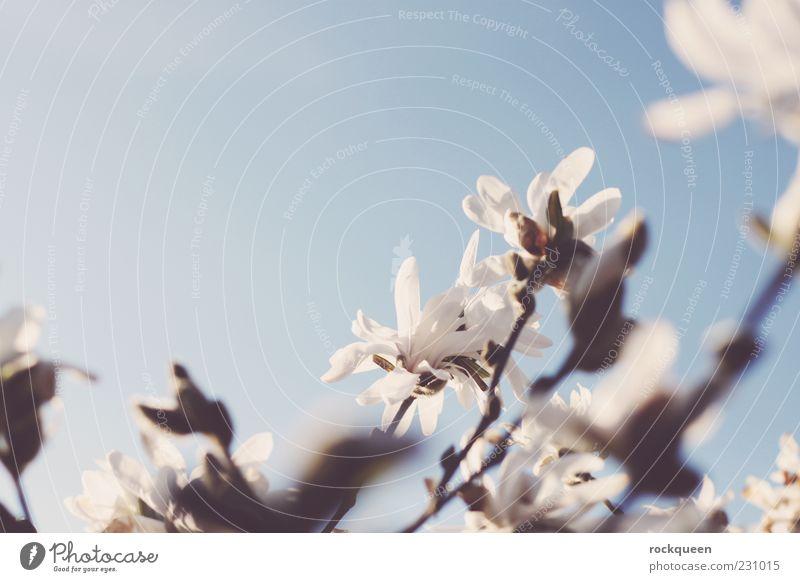 Ein Hauch Frühling Umwelt Natur Pflanze Himmel Wolkenloser Himmel Sonne Sonnenlicht Sommer Schönes Wetter Blume Blatt Blüte Wildpflanze exotisch ästhetisch Duft