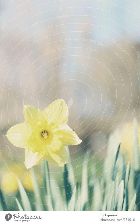 Starr mich nicht so an Umwelt Natur Pflanze Sonne Frühling Sommer Schönes Wetter Blume Blüte Wildpflanze Garten Wiese ästhetisch Freundlichkeit Fröhlichkeit