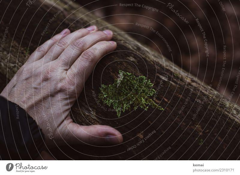 Berühren von Holz Lifestyle harmonisch Wohlgefühl Zufriedenheit Sinnesorgane Erholung ruhig Freizeit & Hobby Ausflug Abenteuer Freiheit Mensch Hand Finger