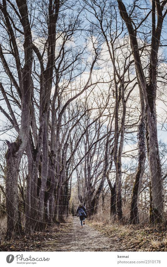 Allee Lifestyle Leben Freizeit & Hobby Ausflug Abenteuer Freiheit Winter 1 Mensch Natur Pflanze Himmel Wolken Baum Wald Wege & Pfade Mantel Rastalocken laufen