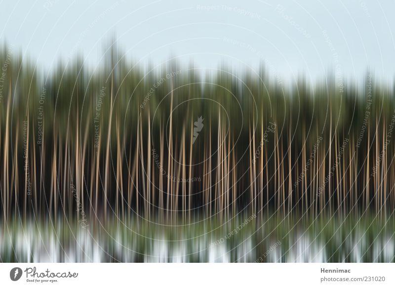 Stylischer Wald. Natur Landschaft Himmel Winter Baum Feld Holz dünn blau grün weiß Bewegung Klima Baumstamm Stab Linie vertikal Zwischenraum Waldrand Unterholz
