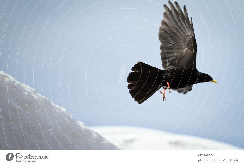 Startflug Himmel Natur weiß Winter schwarz Tier kalt dunkel Schnee Berge u. Gebirge Bewegung Luft Wetter Vogel elegant fliegen