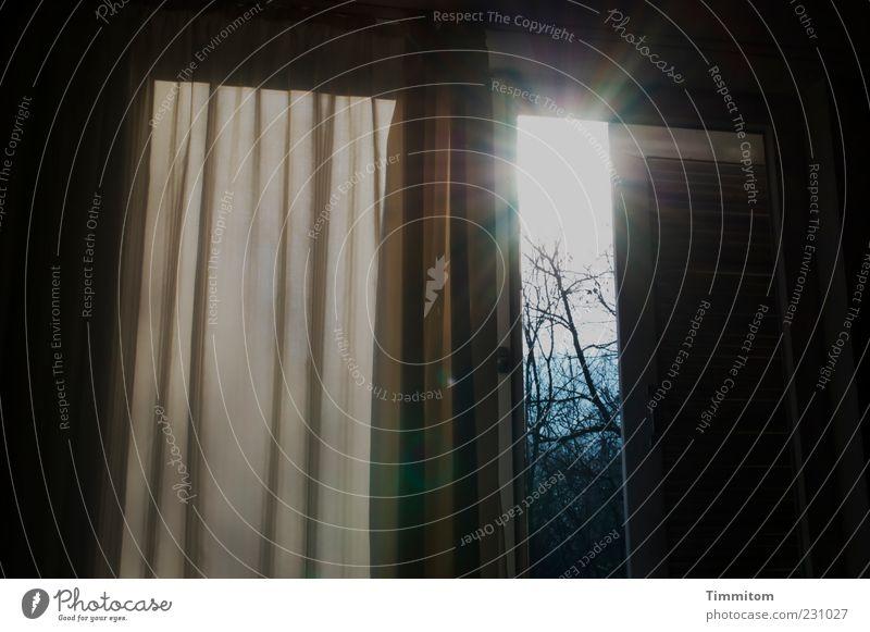 Unerbittlicher Wecker Wohnung Raum Schlafzimmer Sonne Sonnenlicht Schönes Wetter Baum Fenster hell Beginn Sonnenaufgang Vorhang Zweige u. Äste