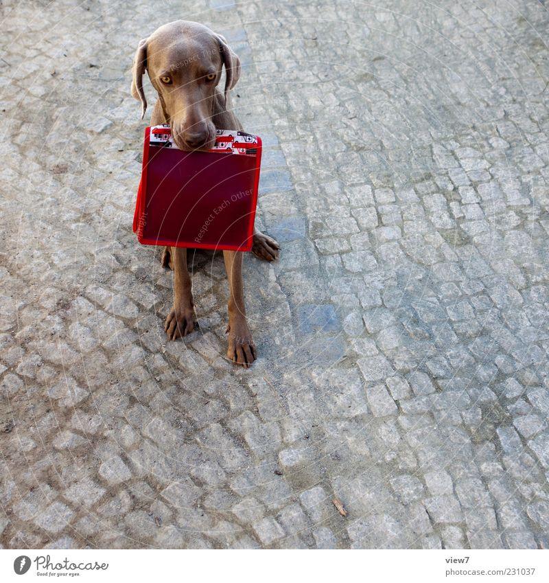 KindergartenTeam alt rot Hund Tier Farbe Stein Stimmung elegant sitzen Beginn frisch authentisch einzigartig retro Neugier Zeichen
