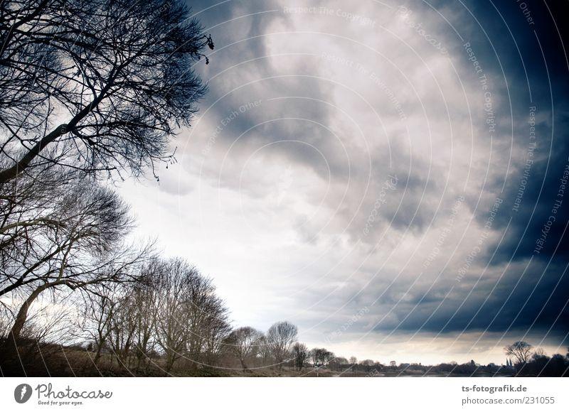 Bäume vs. Sturm 1 : 0 Himmel Natur blau Baum Pflanze Wolken dunkel Umwelt Landschaft Luft braun Wind natürlich bedrohlich Urelemente Sturm