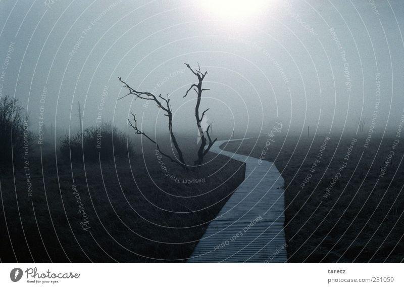 In eine strahlende Zukunft Umwelt Natur Landschaft Herbst schlechtes Wetter Nebel Hohes Venn Hochmoor gruselig kalt Endzeitstimmung Nebelwand Holzweg Fußweg
