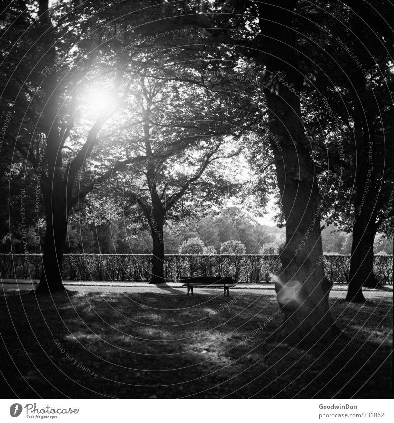 Tristesse Natur schön Baum Pflanze Sonne ruhig Herbst Umwelt Stimmung Park trist Schwarzweißfoto Parkbank