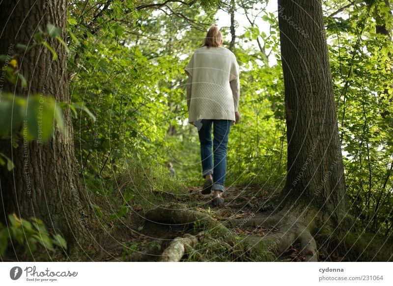 Waldwandern Frau Mensch Natur grün Baum ruhig Einsamkeit Wald Erholung Leben Umwelt Freiheit Bewegung Wege & Pfade Zeit gehen