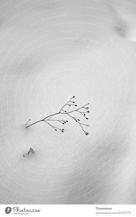 Winterblues. Umwelt Natur Klima Schnee Pflanze Hügel grau schwarz Gefühle Einsamkeit kalt Schwarzweißfoto Außenaufnahme Menschenleer Tag