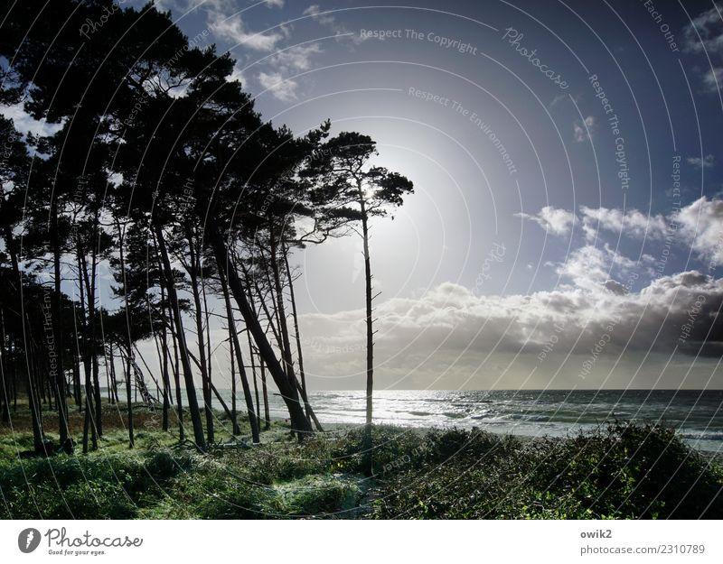 Long Tall Sally Umwelt Natur Landschaft Pflanze Luft Wasser Himmel Wolken Horizont Herbst Schönes Wetter Baum Sträucher Küste Strand Ostsee Weststrand leuchten
