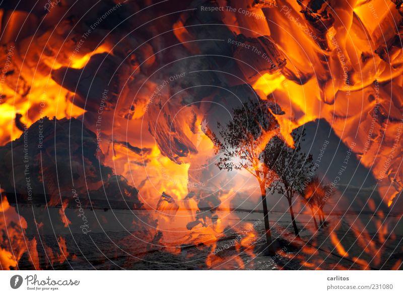 Dem Winter mal Feuer machen Sonne Schönes Wetter Wärme Baum ästhetisch dunkel heiß rot Einsamkeit Endzeitstimmung Energie Surrealismus Umwelt Vergänglichkeit