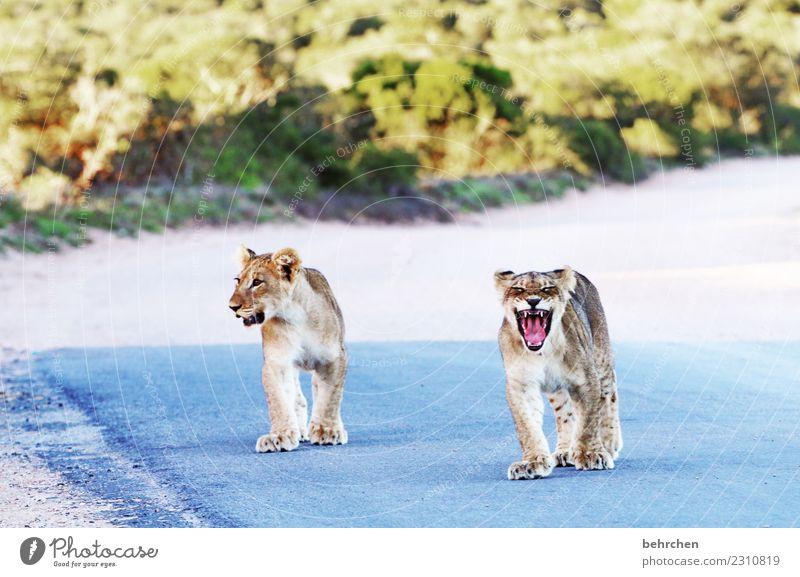 zukunftsmusik | wat'n brüller Ferien & Urlaub & Reisen Tier Ferne Tierjunges Spielen außergewöhnlich Tourismus Freiheit Ausflug wild Wildtier Abenteuer