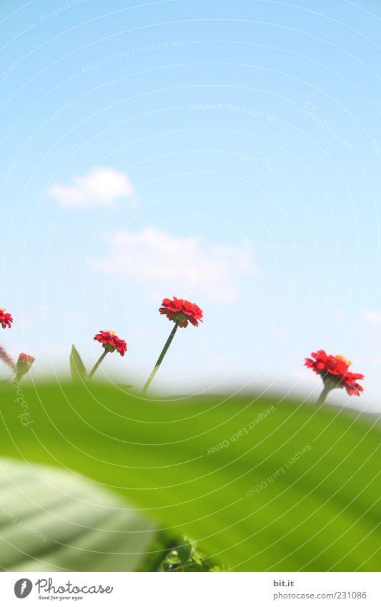 die 5 Zwerge vom Bodensee Pflanze Himmel Wolken Frühling Sommer Schönes Wetter Blume Blatt Blüte Duft Wachstum grün rot Frühlingsgefühle Dimension Perspektive