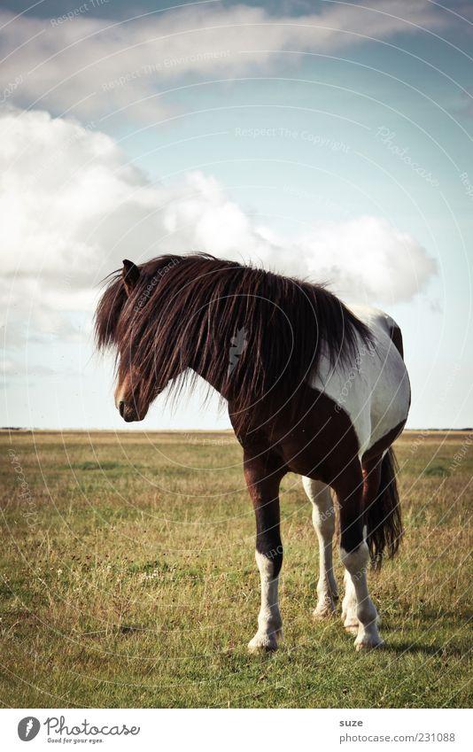 Schaumermal Natur Landschaft Tier Himmel Wolken Schönes Wetter Wiese Nutztier Wildtier Pferd 1 stehen warten ästhetisch natürlich wild Stimmung Weide Mähne
