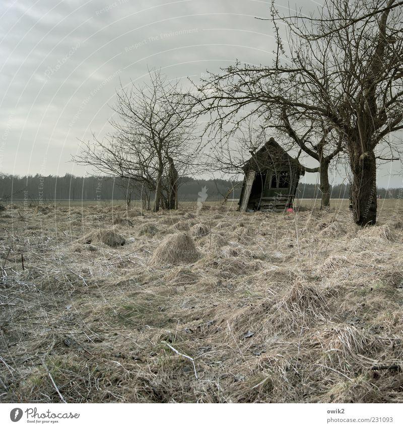 Windig heute Umwelt Natur Landschaft Pflanze Himmel Wolken Winter Sturm Baum Gras Sträucher Zweige u. Äste karg Wiese Hütte alt natürlich grau Vergänglichkeit