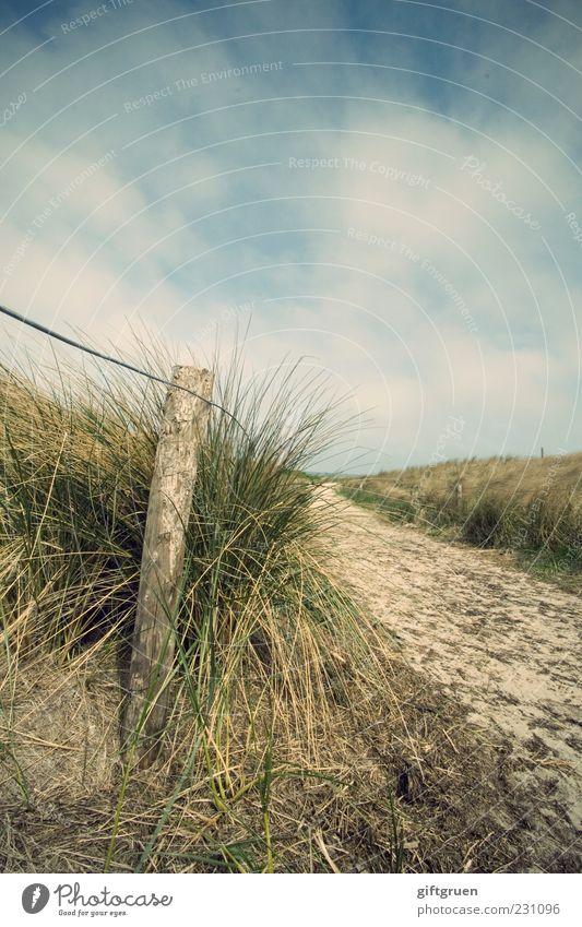 friesisch-herb Himmel Natur Pflanze Sommer Wolken Umwelt Landschaft Gras Wege & Pfade Sand Küste Deutschland natürlich Urelemente Hügel Schönes Wetter
