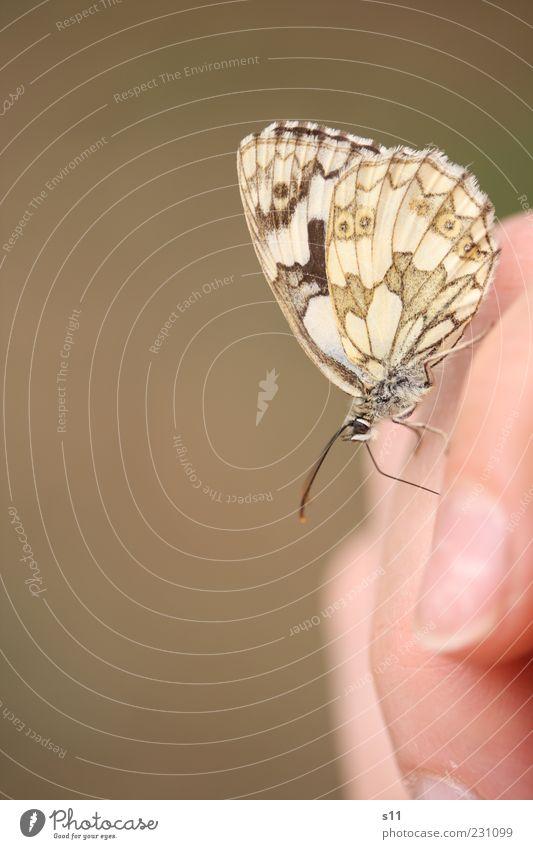 summerfeeling schön Sommer Freude Tier Glück braun Zufriedenheit sitzen elegant Fliege frei ästhetisch Finger Flügel niedlich Neugier