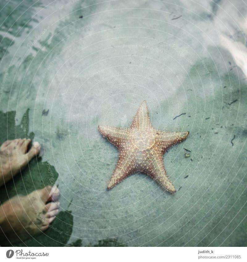 hallo Seestern Schwimmen & Baden Sommerurlaub Strand Meer Insel Wellen Fuß Natur Tier Wasser Bucht Karibisches Meer Oase Bocas Del Toro Panama Mittelamerika