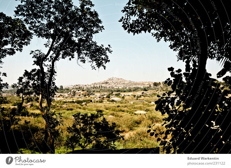 Steinberg Natur Landschaft Pflanze Himmel Indien Hampi Baum Gras Felsen grün Farbfoto Außenaufnahme Menschenleer Tag Schatten Kontrast Silhouette Sonnenlicht