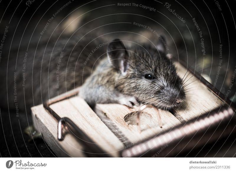 Maus Natur Landschaft Tier Ein Lizenzfreies Stock Foto Von