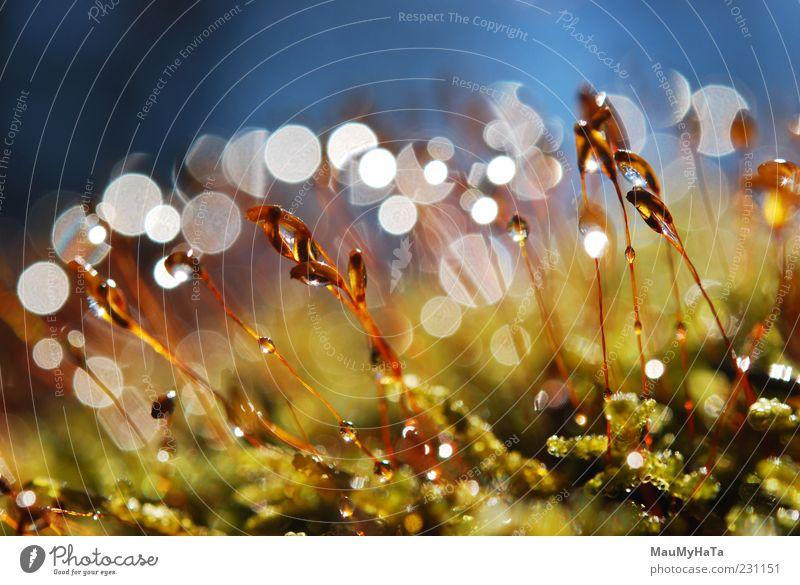 Moos Natur Pflanze Urelemente Erde Wasser Wassertropfen Himmel Sonne Sonnenlicht Frühling Klima Regen Blatt exotisch Garten Park Urwald Felsen Alpen