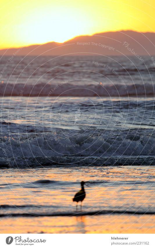 Natur schön Himmel Sonne Meer rot Sommer Strand Ferien & Urlaub & Reisen dunkel Landschaft Vogel Küste Hintergrundbild Horizont Insel