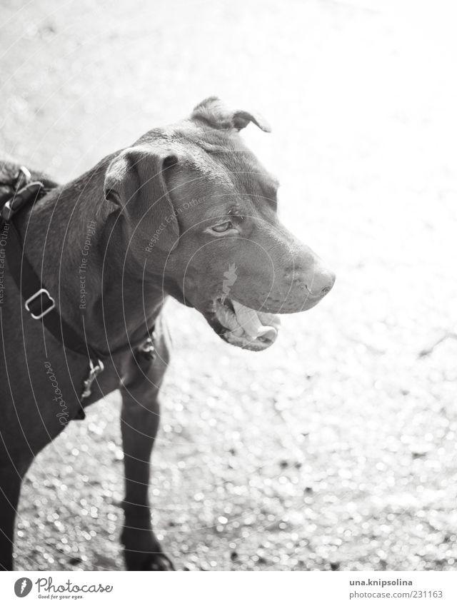 wröff Hund Tier Fell Haustier Wachsamkeit Hundehalsband Bellen