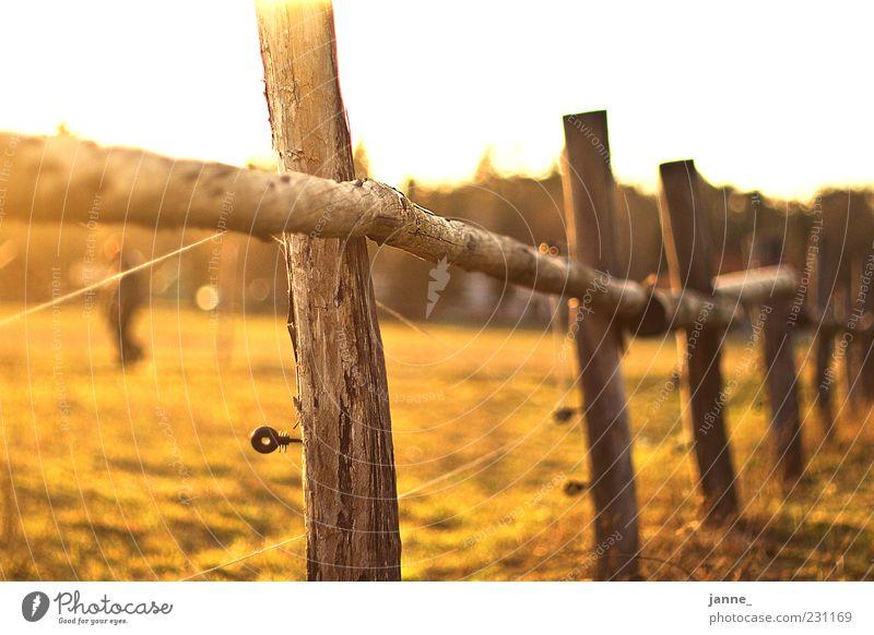 sommerliches Natur grün Sommer gelb Wiese Landschaft Wärme Feld gold Schönes Wetter Weide Zaun Blendenfleck Zaunpfahl Elektrozaun