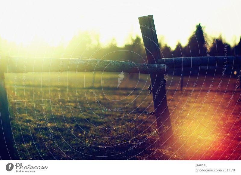 ah damals Natur Landschaft Sonne Sonnenlicht Sommer Wetter Schönes Wetter Feld Wärme gelb gold grün weiß Zaun Wiese Gegenlicht Farbfoto mehrfarbig Außenaufnahme