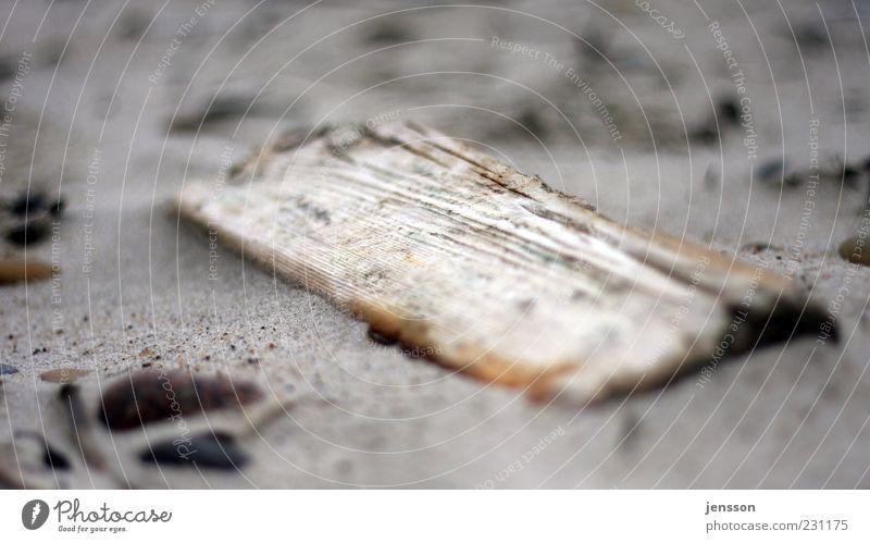 strand.gut Natur alt Strand Umwelt Holz Sand Küste dreckig liegen kaputt verfallen Holzbrett verloren eckig finden Nahaufnahme