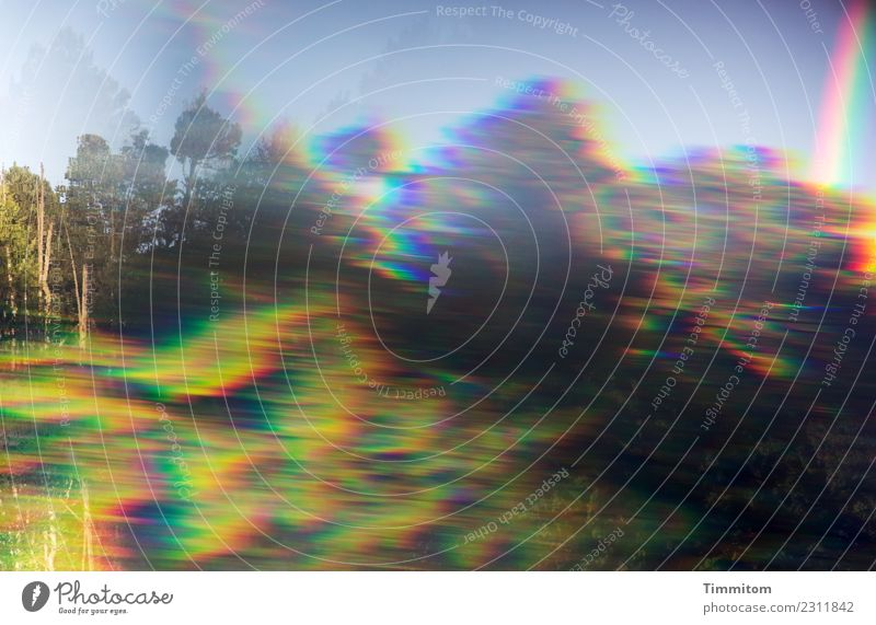 drunter und drüber | See, Wald, Himmel. Umwelt Natur Pflanze Wasser Schönes Wetter Irritation Prisma Reflexion & Spiegelung Farbfoto Außenaufnahme Menschenleer