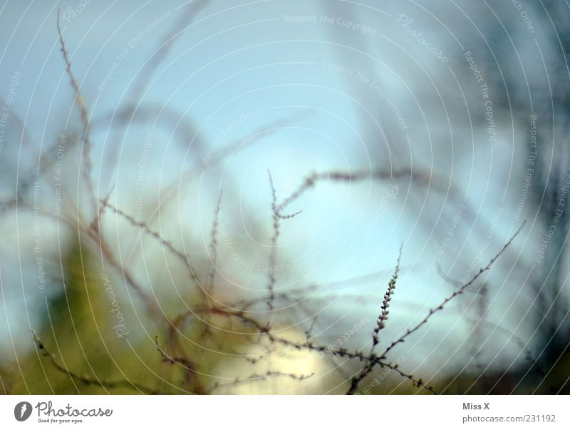 Blitze Baum Pflanze Wachstum Sträucher Ast zart Zweig filigran Blattknospe Frühlingstag